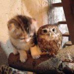 Neparastā draudzība: Kaķēns un pūču mazulis ir nešķirami 3