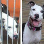 Aizkustinoši: 15 suņu un kaķu fotogrāfijas pirms un pēc patversmes 10