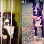 Aizkustinoši: 15 suņu un kaķu fotogrāfijas pirms un pēc patversmes 4