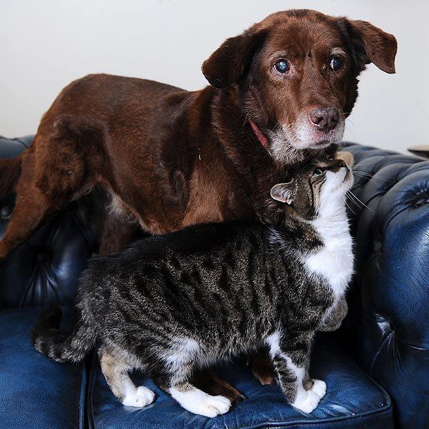 kā suns ar kaķi