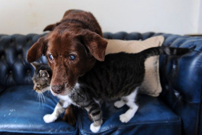 Ļoti aizkustinoša draudzība: Kaķis - akla suņa pavadonis 1