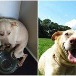 Aizkustinoši: 15 suņu un kaķu fotogrāfijas pirms un pēc patversmes 1