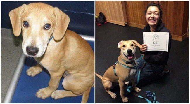 Aizkustinoši: 15 suņu un kaķu fotogrāfijas pirms un pēc patversmes 7