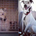 Aizkustinoši: 15 suņu un kaķu fotogrāfijas pirms un pēc patversmes 2