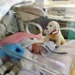 Tikai 24 nedēļas veca mazulīte - izdzīvoja! 7