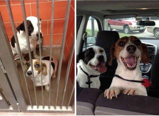 Aizkustinoši: 15 suņu un kaķu fotogrāfijas pirms un pēc patversmes 5