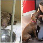 Aizkustinoši: 15 suņu un kaķu fotogrāfijas pirms un pēc patversmes 9