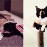 Aizkustinoši: 15 suņu un kaķu fotogrāfijas pirms un pēc patversmes 6