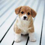 12 iemesli kāpēc suns ir labāks par puisi 1