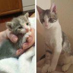 Aizkustinoši: 15 suņu un kaķu fotogrāfijas pirms un pēc patversmes 12