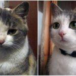Aizkustinoši: 15 suņu un kaķu fotogrāfijas pirms un pēc patversmes 14