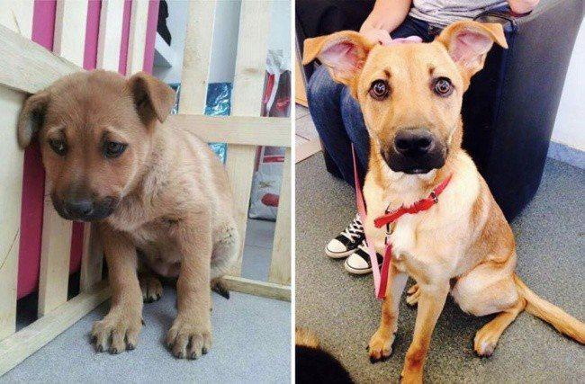 Aizkustinoši: 15 suņu un kaķu fotogrāfijas pirms un pēc patversmes 15