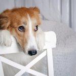 Neapstrīdami iemesli kāpēc suns ir daudz labāks par puisi 7