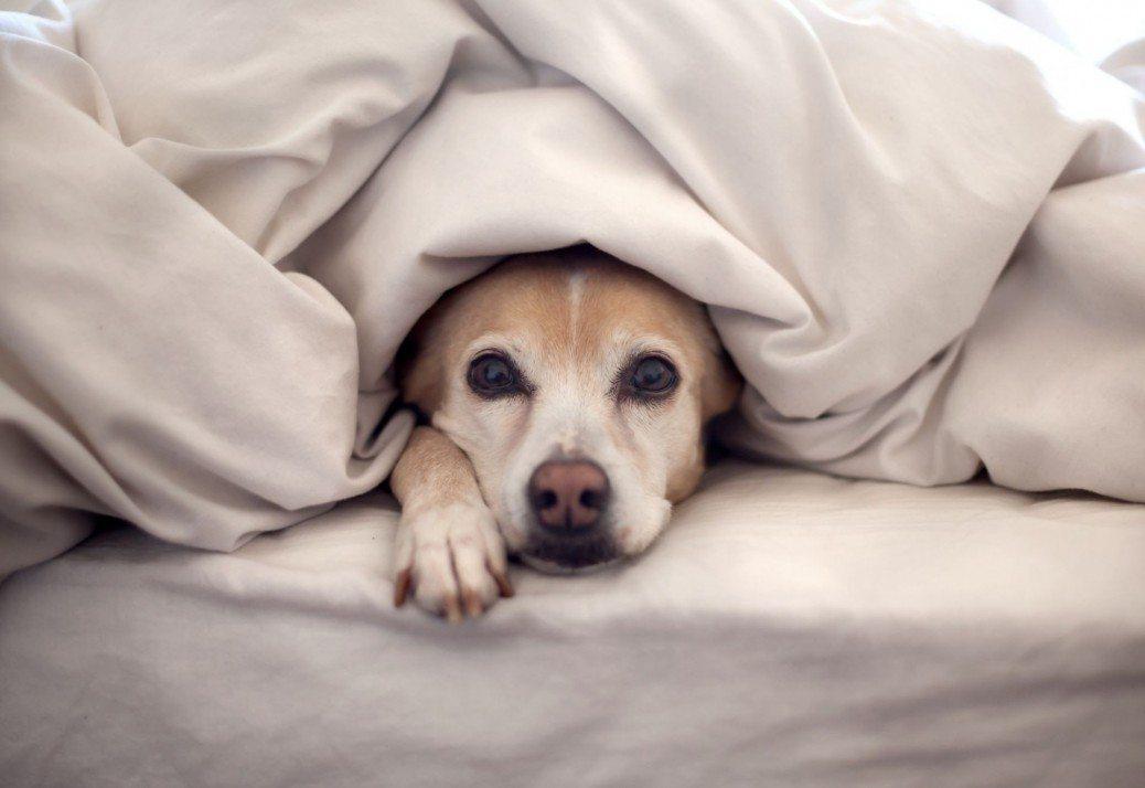 12 iemesli kāpēc suns ir labāks par puisi 3