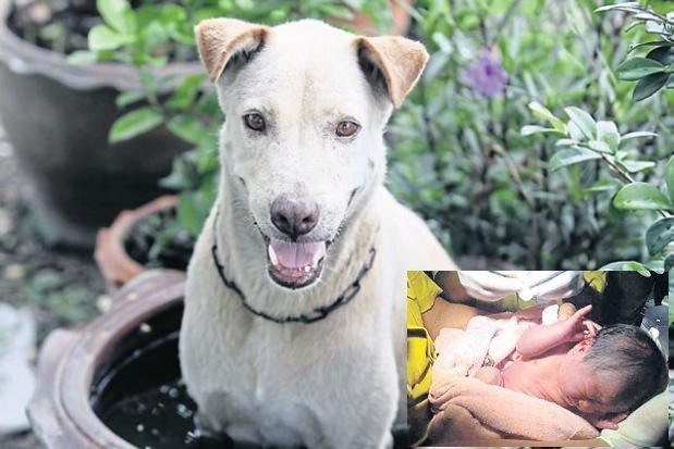 Klaiņojošs suns izglābj zīdaini no nāves, kuru miskastē bija izmetusi miesīgā māte