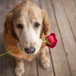 Neapstrīdami iemesli kāpēc suns ir daudz labāks par puisi 6