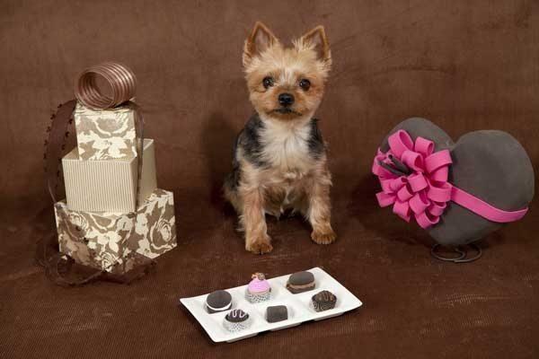 12 iemesli kāpēc suns ir labāks par puisi 2