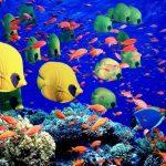 20 vietas uz Zemes, kur Daba nav skopojusies ar krāsām 5