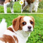 15 amizanti suņuki, kuri radušies pēc negaidītas sapārošanās 11