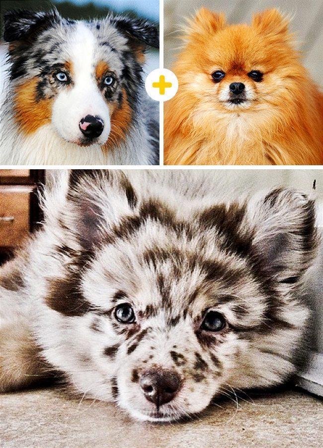 15 amizanti suņuki, kuri radušies pēc negaidītas sapārošanās 1