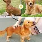 15 amizanti suņuki, kuri radušies pēc negaidītas sapārošanās 12