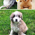 15 amizanti suņuki, kuri radušies pēc negaidītas sapārošanās 13