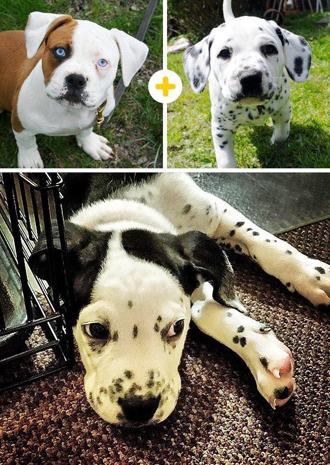 15 amizanti suņuki, kuri radušies pēc negaidītas sapārošanās 14