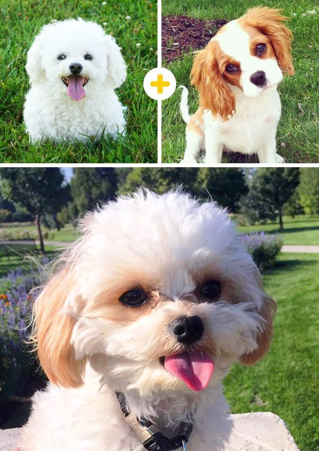 15 amizanti suņuki, kuri radušies pēc negaidītas sapārošanās 15