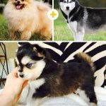15 amizanti suņuki, kuri radušies pēc negaidītas sapārošanās 4