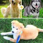 15 amizanti suņuki, kuri radušies pēc negaidītas sapārošanās 6