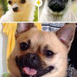 15 amizanti suņuki, kuri radušies pēc negaidītas sapārošanās 5