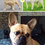 15 amizanti suņuki, kuri radušies pēc negaidītas sapārošanās 8