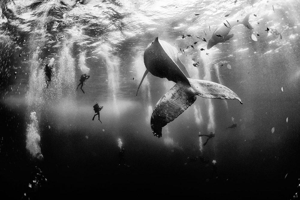 25 labākās National Geographic 2015 bildes 1