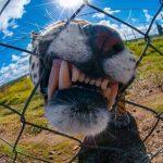 25 labākās National Geographic 2015 bildes 16
