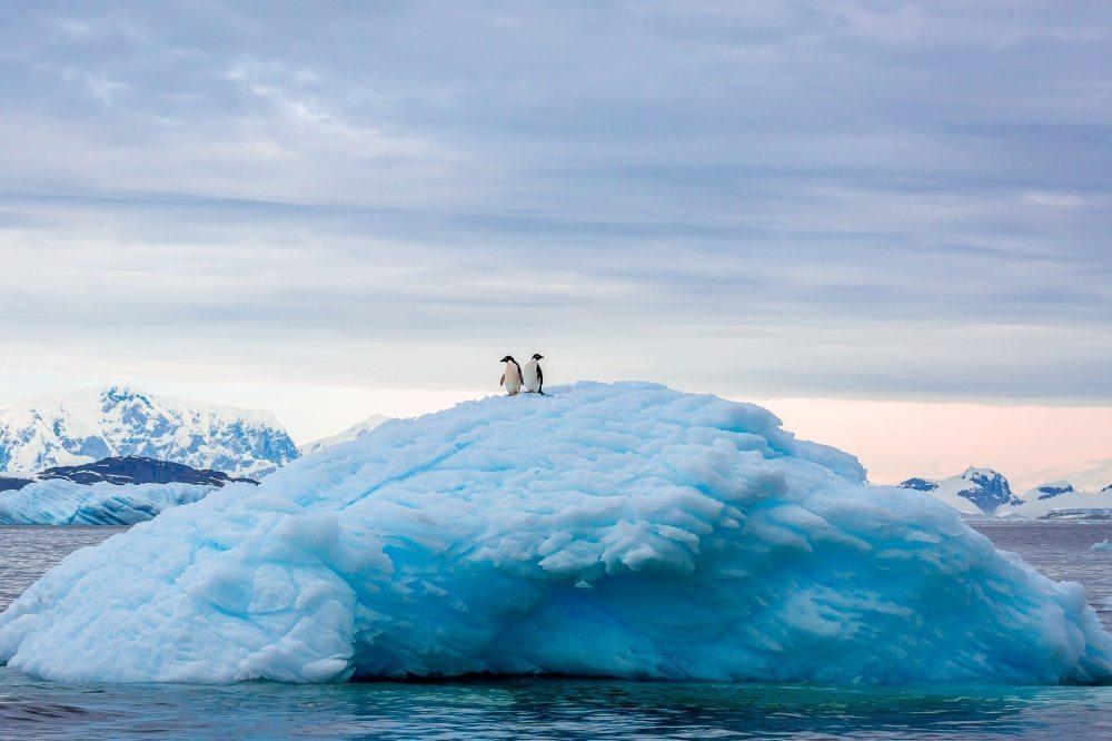 25 labākās National Geographic 2015 bildes 25