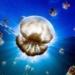 25 labākās National Geographic 2015 bildes 5