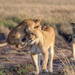 25 labākās National Geographic 2015 bildes 7
