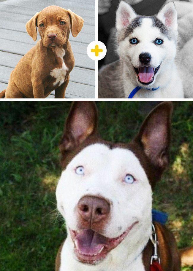 15 amizanti suņuki, kuri radušies pēc negaidītas sapārošanās 9