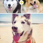 15 amizanti suņuki, kuri radušies pēc negaidītas sapārošanās 10