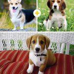 15 amizanti suņuki, kuri radušies pēc negaidītas sapārošanās 3