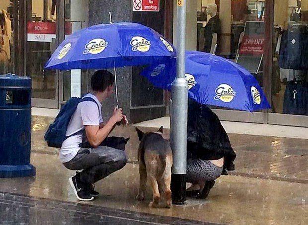 Aizkustinoši: Pāris pasargā suni no lietus, kamēr tā saimnieks mierīgi iepērkas 2
