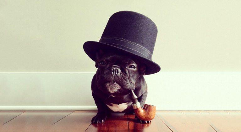 Viesnīcas īpašnieka fantastiskā atbilde uz suņa īpašnieka vēstuli