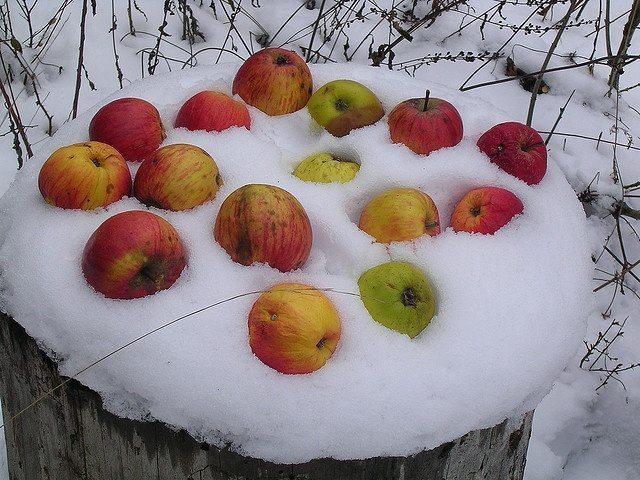 Pilna māja ar āboliem jeb 30 idejas, ko ar tiem iesākt 16