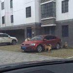 Kāpjot no auto viņš iespēra klaiņojošam sunim. Suņa atriebības plāns bija sekojošs... 1