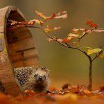 15 dzīvnieku bildes, kuras jūs iemācīs izbaudīt rudens burvību 13