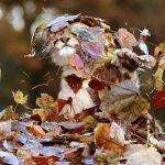15 dzīvnieku bildes, kuras jūs iemācīs izbaudīt rudens burvību 11