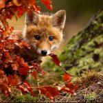 15 dzīvnieku bildes, kuras jūs iemācīs izbaudīt rudens burvību 15