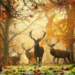 15 dzīvnieku bildes, kuras jūs iemācīs izbaudīt rudens burvību 17