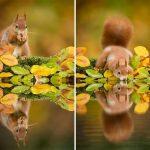 15 dzīvnieku bildes, kuras jūs iemācīs izbaudīt rudens burvību 5