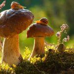 15 dzīvnieku bildes, kuras jūs iemācīs izbaudīt rudens burvību 21
